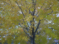 autumn leaves green
