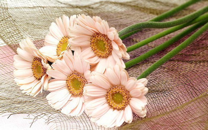 1440x900 High Resolution Flower Art 143655
