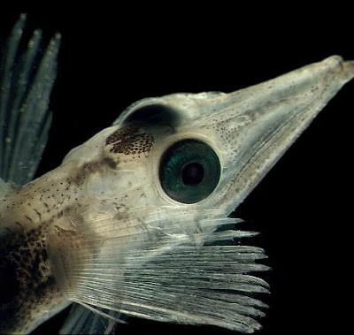 The bizarre creatures living at the bottom of the Arctic AND Antarctic seas