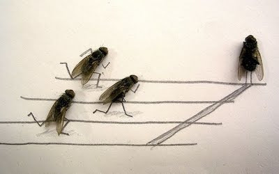 fly dead body