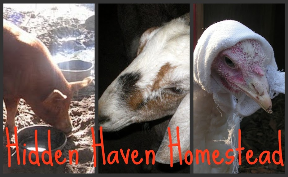 Hidden Haven Homestead