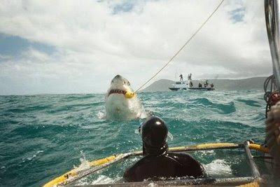Shark the World Biggest Snake Ever