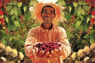 Philippine Coffee Farmer