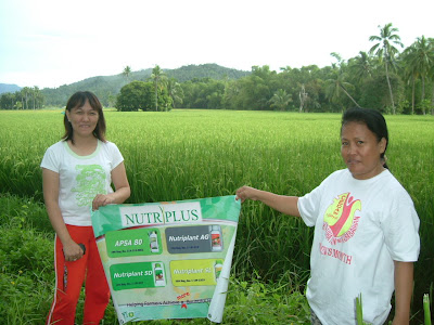 Nutriplant Organics Rice Field