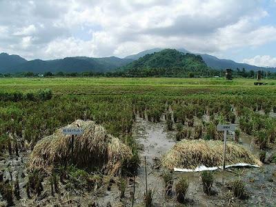 Tacloban+flood