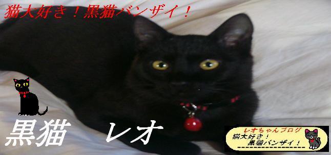 猫大好き!黒猫バンザイ!