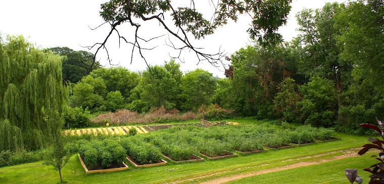 Frogsleap Farm