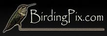 Visit BirdingPix.com Website