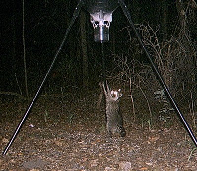 Download image Raccoon Proof Deer Feeder PC, Android, iPhone and iPad ...