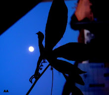 oiseau -lune