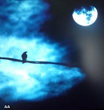 lune -oiseau