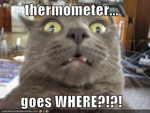 Funny Cat Pictures! Funny-pictures-cat-realizes-where-the-thermometer-goes