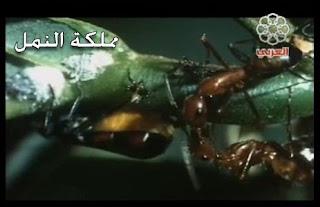 مملكة النمل قناة العربي الثقافية