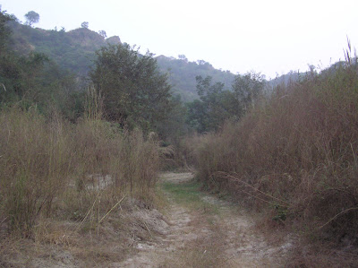 A jungle trail in Kikar