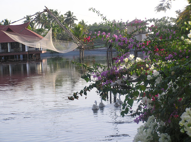 View of the green setting inside the Lake View Resort in Alleppey, Kerala with flowers, and fishing nets in the water