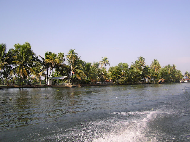 The greenery at the side of the waterway in Alleppey, Kerala, India