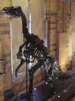 Skeleton of a pre-historic animal in the Natural History Museum
