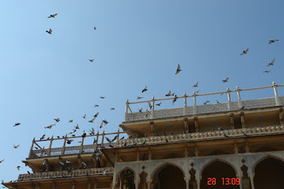 Pigeons crowding the top of a structure inside the Jaipur City Palace