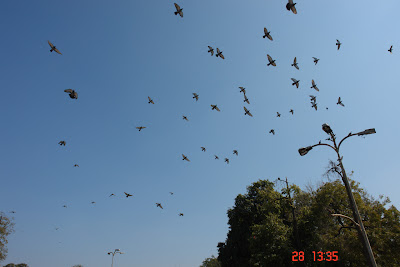 Photo: Pigeons in the sky just over the Jaipur City Palace