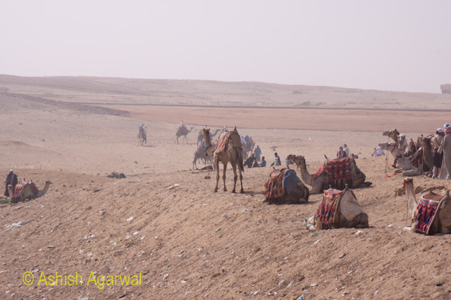 Giza Panorama Point - Camels near the panorama point on the sand of the desert, waiting for tourists