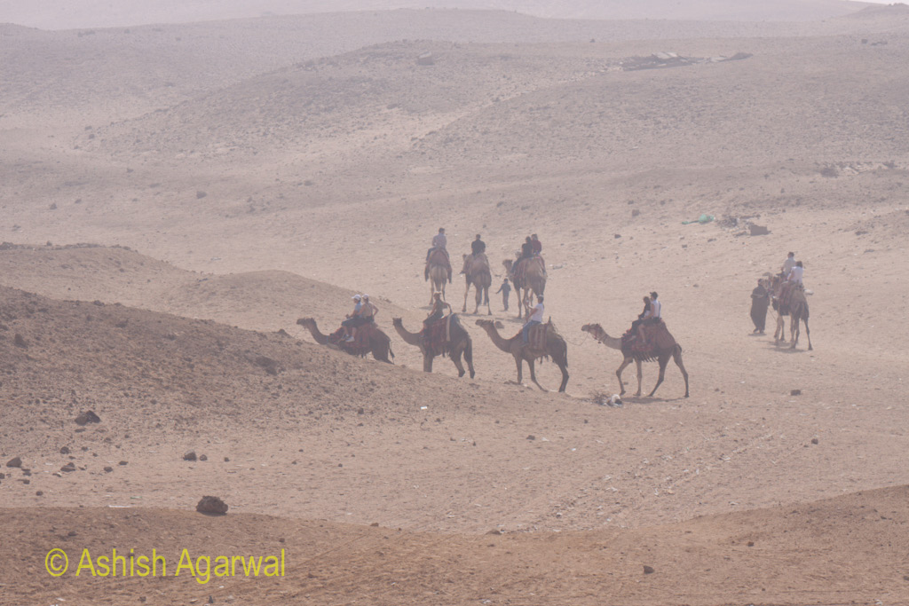 Cairo Pyramid - Camels carrying tourists in the desert for a quick trip, close to the Great Pyramids