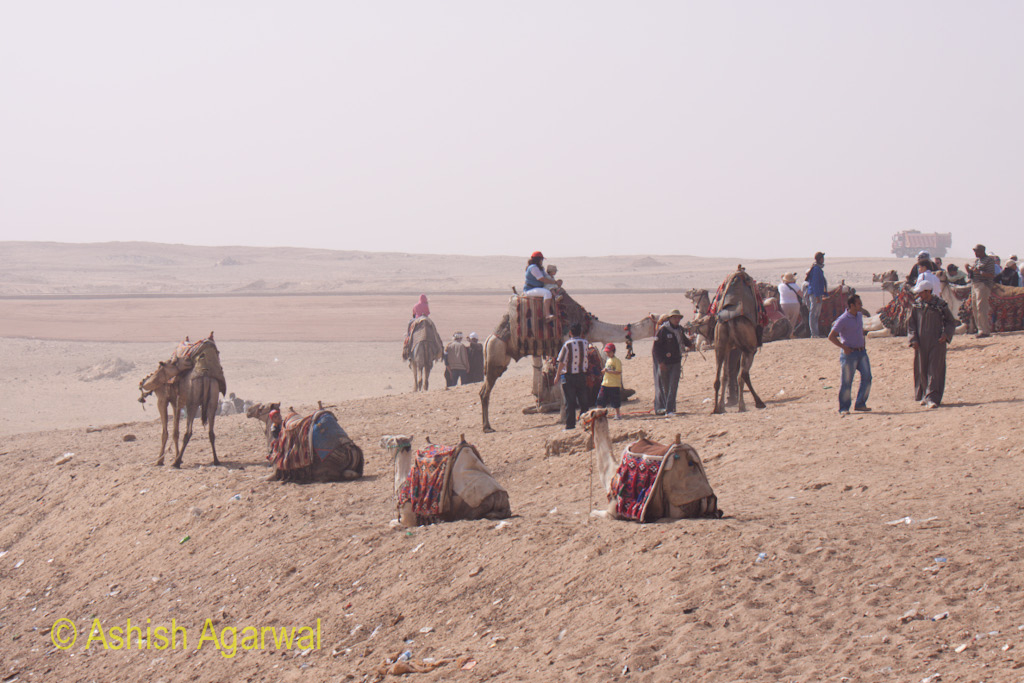 Great Pyramids - Camels at the Panorama point near the Pyramids in Giza, waiting for tourists