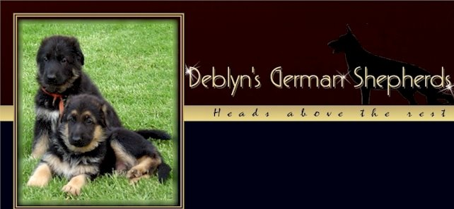 Deblyn's German Shepherds