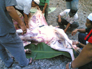 harga lembu korban