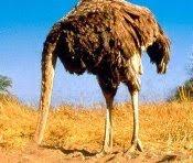 www.aybilgi.net kafasına kuma gömen hayvan