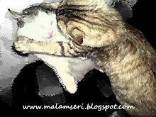 ~My lurve cats~