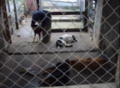 Foto en la eliminación de perros en Coyhaique