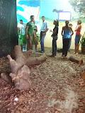 Feira de Ciências/Desflorestamento2008