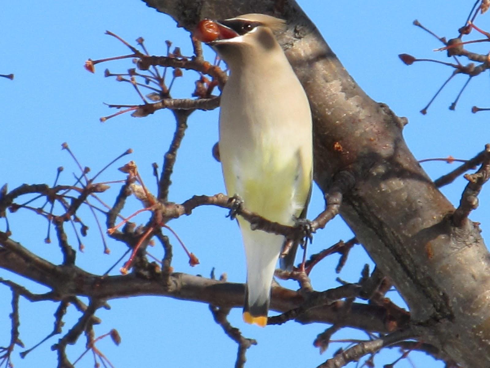 birdseyeviews northern neck virginia birds and sights