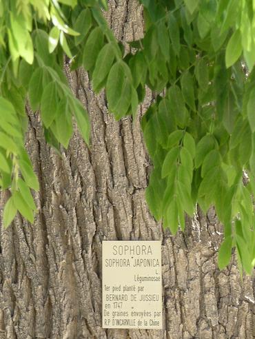 cherry tree bark identification. cherry tree bark