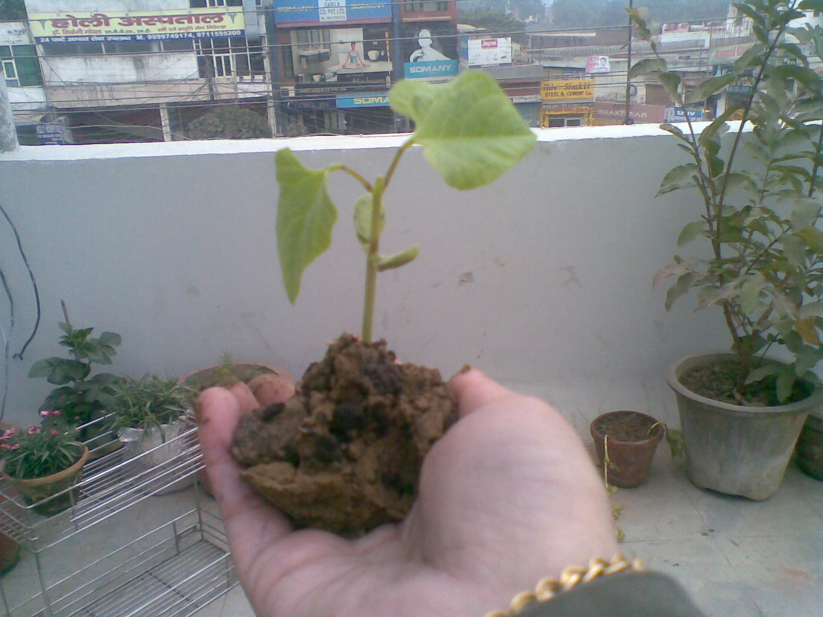 Obsessive compulsive gardener whats happening to my for Soil gurgaon