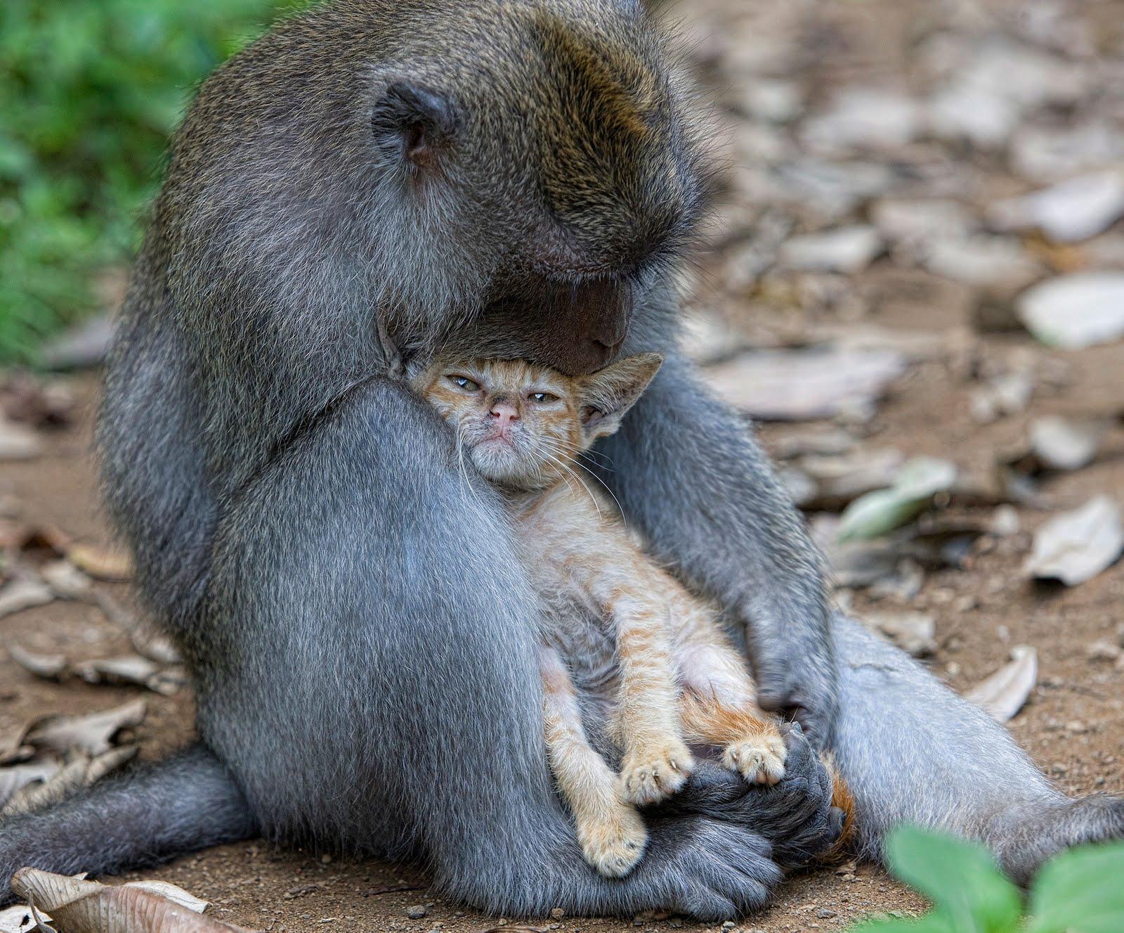 http://3.bp.blogspot.com/_8fuBbOwgwB0/THsRZxtyCcI/AAAAAAAAIzI/mjz8S7rUuMk/s1600/macaco_gato.jpg