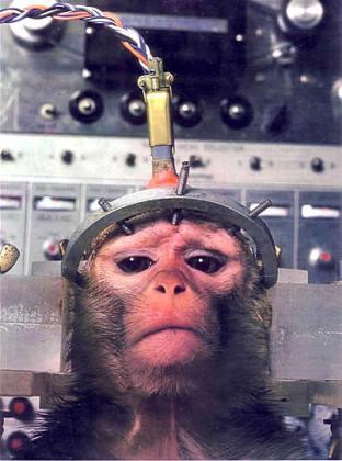 آزمایشات بیرحمانه روی حیوانات