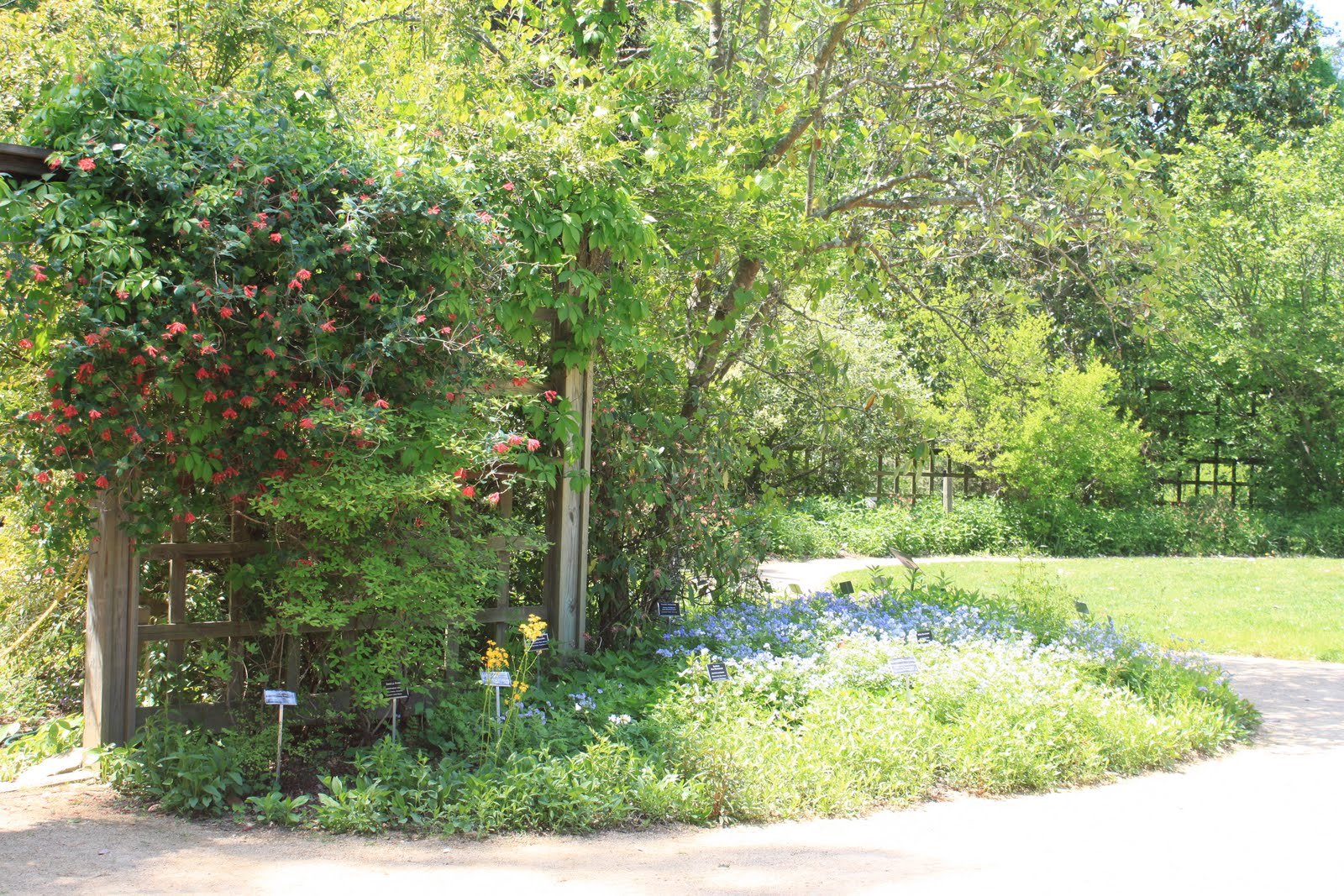 Notes From A Mom In Chapel Hill A Guide Nc Botanical Gardens