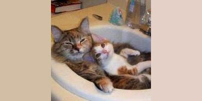 Cats take the bath.