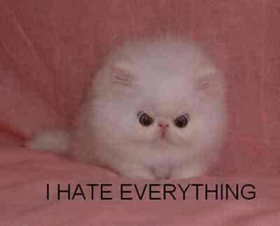 The evil kitten.