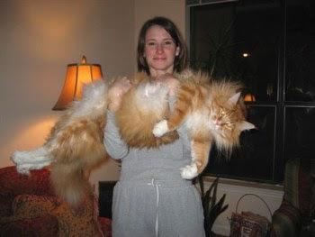 Huge fine cat.