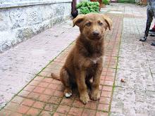 Teddy adottato a bari