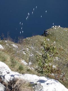 Monte Moregallo e barche a vela sul Lario