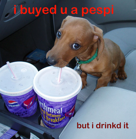 dog-pepsi.jpg