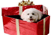 Perritos de regalo