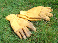 Manly gloves