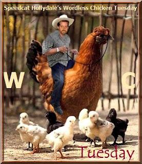 Speedcat Chicken Cowboy