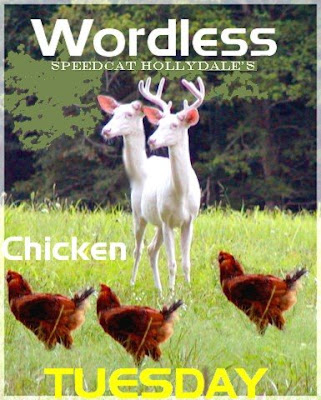 WORDLESS CHICKEN TUESDAY
