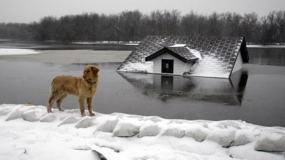Fargo flood plane froxen ice and a house underwater with family dog looking on
