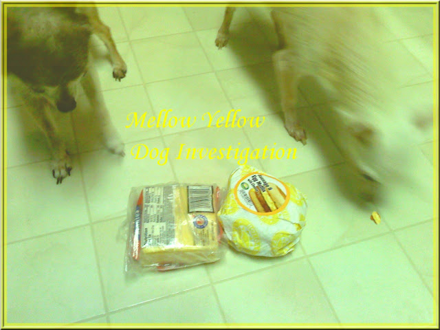 yellow dog yellow cheese mellow yellow
